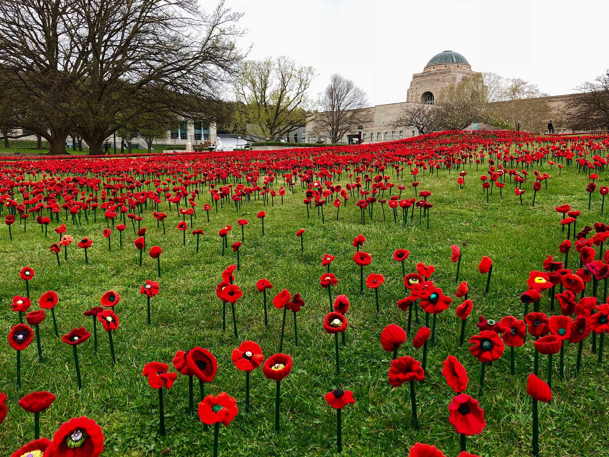Landscape design for 5000 poppies